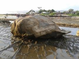 Batu kura kura